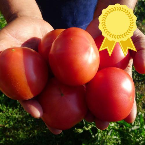 6-3 토마토01.jpg