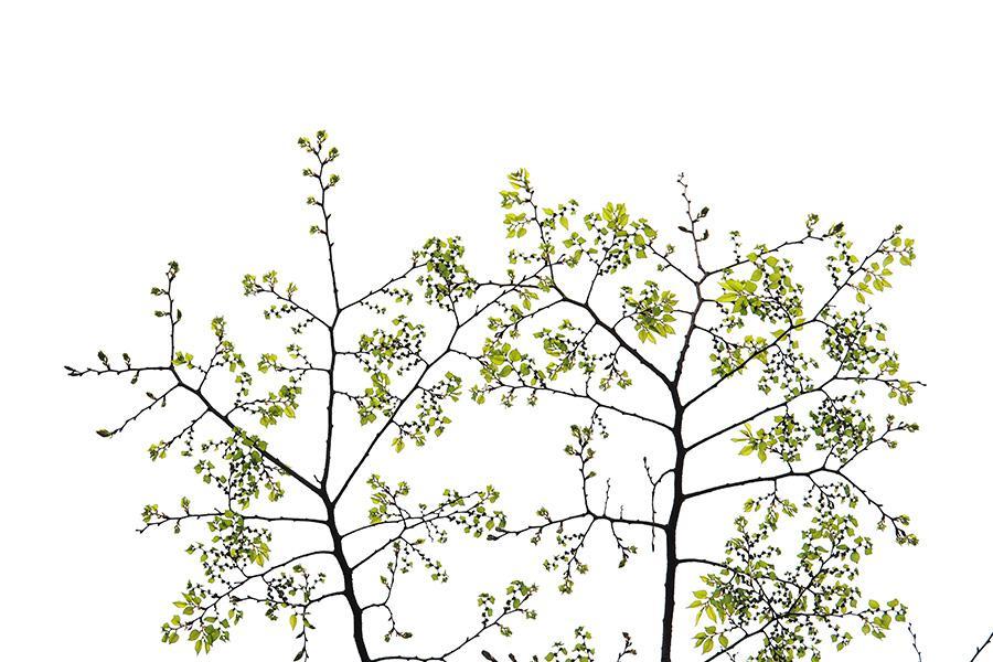 s나무_02.jpg