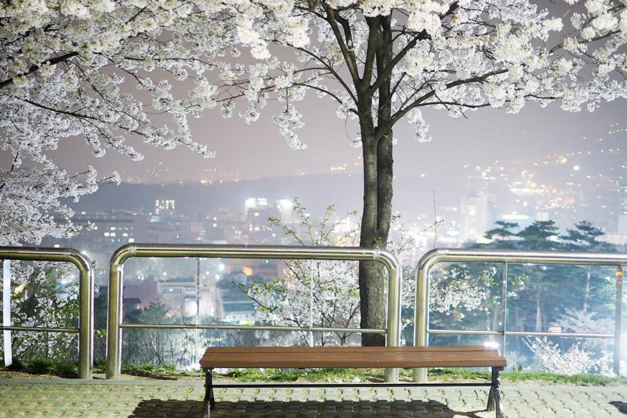 s나무_03.jpg