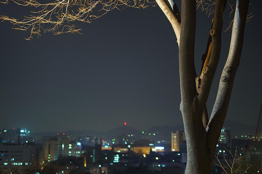 s나무_05.jpg