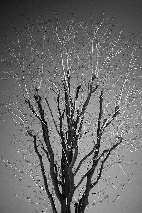 s나무_08.jpg