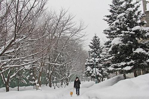 winter-613647_960_720.jpg