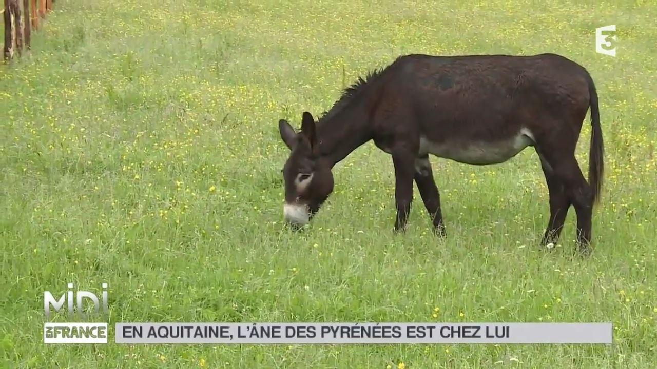 ANIMAUX _ En Aquitaine, l'âne des Pyrénées est chez lui - YouTube (720p).mp4_000151550.jpg